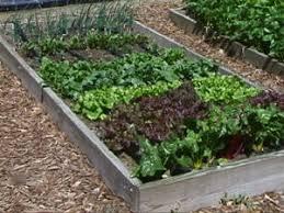 mulching vegetable garden gardening ideas