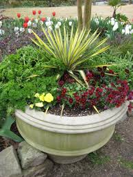 tropical garden ideas foolproof winter hardy tropical and temperate plants hgtv