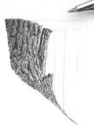 drawing trees stumps and trunks pen and ink art instruction