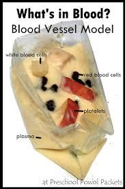edible blood what s inside your blood an edible model preschool powol packets