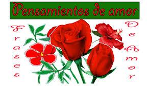 bonitas de rosas rojas con frases de amor imagenes de amor facebook frases de amor corazones flores rojas para dedicar al amor de tu