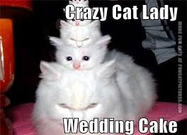 Crazy Cat Lady Memes - funny christmas pictures funny crazy cat lady pictures