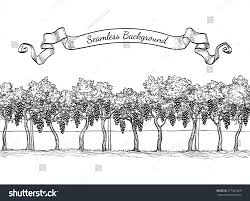 vineyard seamless background vine sketch isolated stock vector