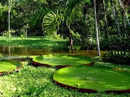 the amazon amazon river expert
