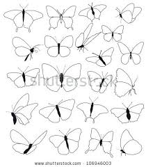 butterfly with transparent wings outlines from side view 318 58262