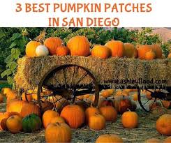 Local Pumpkin Patches Ashley Flood 3 Best Pumpkin Patches In San Diego Area Halloween