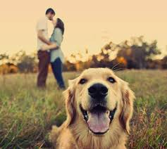 21 oh so adorable engagement photos with dogs engagement 21st