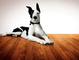 37 best pets floors images on animals adorable