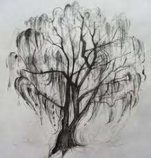 delicate weeping willow tree yahoo image search results