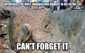 Elephant Meme - bad luck elephant elephants know your meme