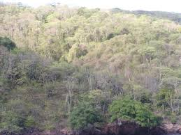 Tropical Dry Forest Animals And Plants - tropical and subtropical dry broadleaf forests wikipedia