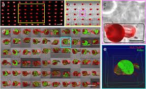 Speed Of Light In A Vacuum All In One 3d Printed Microscopy Chamber For Multidimensional