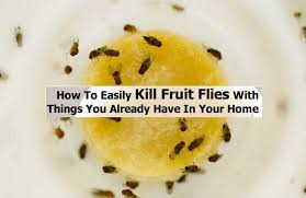 How To Get Rid Of Flies In The Backyard by How To Get Rid Of Flies Education Photography Com