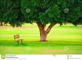 shade garden ideas under trees inside tree 25 best landscaping
