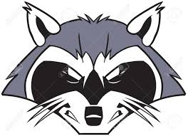 racoon stock photos royalty free racoon images and pictures