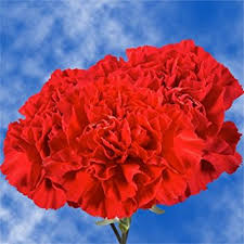 Wholesale Carnations Amazon Com Globalrose 200 Fresh Cut Red Carnations Fresh