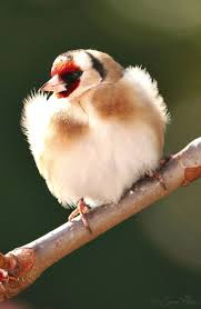 1580 best birds images on pinterest beautiful birds animals and