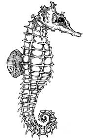 pictures of seahoars tattoos seahorse tattoo meaning tattoos
