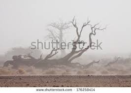 sand storm stock images royalty free images u0026 vectors shutterstock