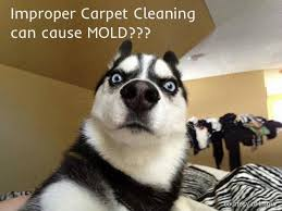 Carpet Cleaning Meme - 19 best chem dry of marin carpet cleaning images on pinterest