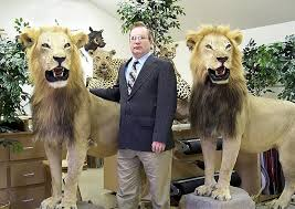 lions for sale grignons artistic taxidermy