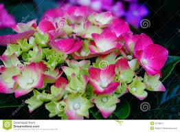 lily flower garden flower shop sale flower petals plant