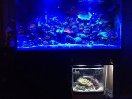 Refugium Light Question About Sump And Refugiums Reef2reef Saltwater And Reef