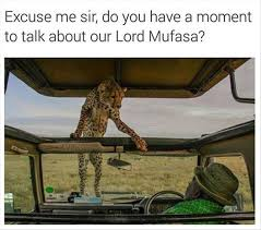 Mufasa Meme - lord mufasa funny pictures quotes memes funny images funny