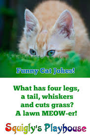 cat jokes at squigly u0027s playhouse