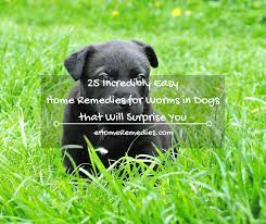 25 incredibly easy home remedies for worms in dogs that will
