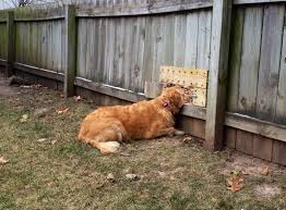 perfect fences for dogs backyard dog size inside design pictures