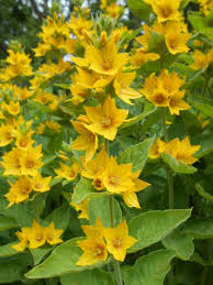 english garden flower names u2013 thin blog