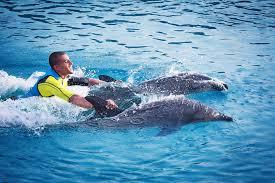 royal swim with dolphins at dolphin bay atlantis dubai