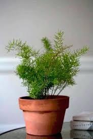 houseplants that need little light indoor plants no light ubound co