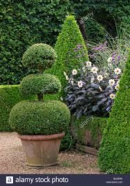 Eugenia Topiary 100 Topiary Man Creates Spectacular Topiary Garden With