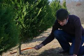 east tennessee tree shortage drives up cost worries