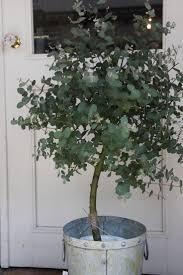 Indoor Modern Planters Best 25 Indoor Trees Ideas On Pinterest Indoor Tree Plants