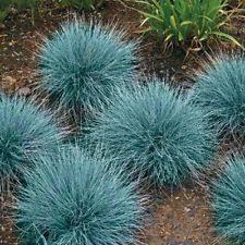 canada green grass seed 500 grams ebay