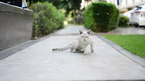 Cats In Small Spaces Video - domestic cat sitting on the lawn in the park stock footage video