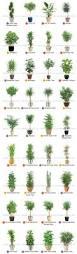unique indoor planters best 25 large indoor plants ideas on pinterest indoor green