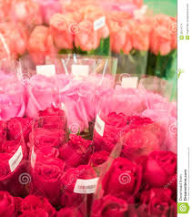 roses for sale sweet roses for sale stock images image 35974774