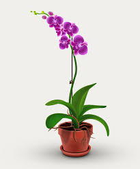 orchid plant illustrator tutorial orchid plant illustrator tutorials tips