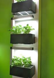 lights to grow herbs indoors the lightpot mixing lighting with plants herbs indoors darkness