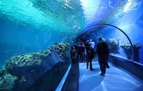 aquarium copenhagen aquarium letter from lund