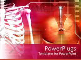 powerpoint design lungs powerpoint template medical theme with human spine and lungs on