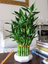 plante d駱olluante chambre une plante pour chaque pièce