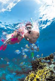 snorkeling images Snorkeling stuart cove 39 s jpg