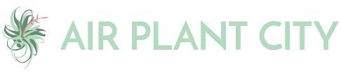 native florida air plants air plant city buy air plants u0026 tillandsias online today