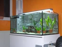 How To Design An Aquarium - Home aquarium designs