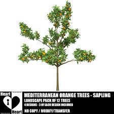 second marketplace tree mediterranean orange trees